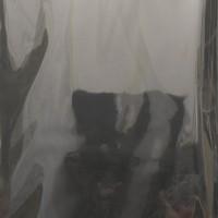 Timo Kube, Trust me (in smoke 2), 2014